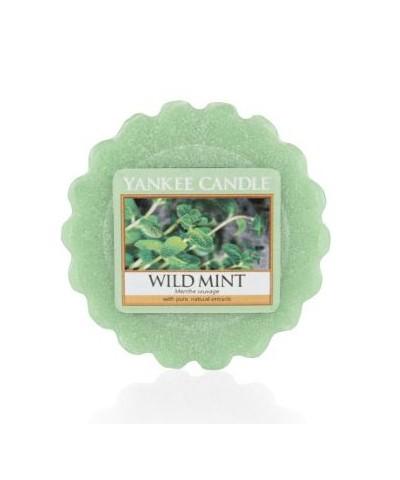 Wild Mint - Dzika Mięta (Wosk Zapachowy)