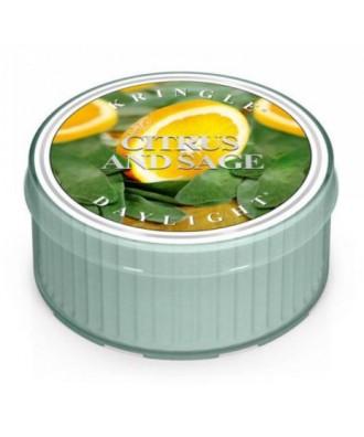 Kringle Candle - Citrus And Sage - Daylight